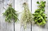 Tratează celulita folosind remedii naturiste