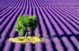 Plantele din grădină în slujba frumuseţii tale
