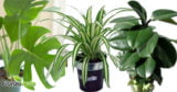 TOP plante care purifica aerul din locuinte – studiu NASA