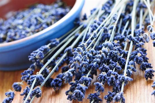 Ceaiul de lavandă, aliat pretios pentru tratarea a peste 70 de boli si afectiuni