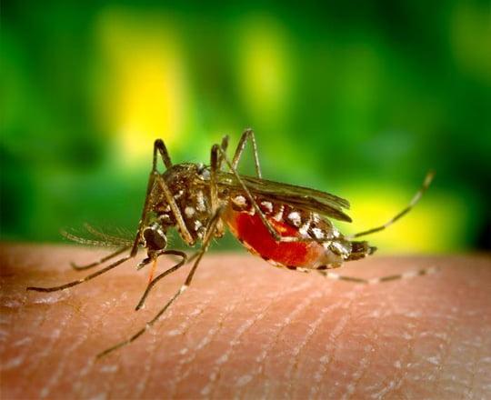 Remedii naturiste eficiente impotriva intepaturilor de insecte