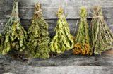 Cum sa usuci corect plantele medicinale