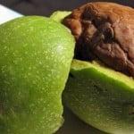 Nucile verzi previn infarctul si combat afectiunile stomacului