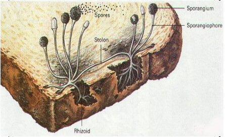 paine-muceda