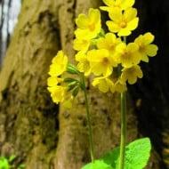 O plantă care creşte şi în România a fost desemnată floarea anului 2016