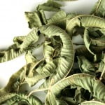Lamaita planta-leac impotriva Helicobacter pylori, dispepsie si crampe stomacale