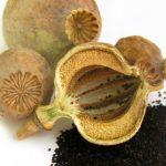 Ceaiul de seminţe de mac este eficient impotriva OSTEOPOROZEI