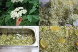 Dieta cu flori de soc: slabesti 7 kg si elimini celulita si toxinele din organism.