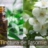 Tinctura de iasomie, un elixir cu putere vindecatoare uimitoare