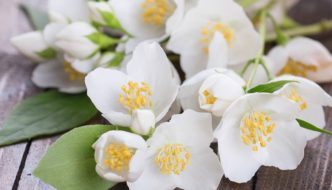 7 Remedii cu iasomie – beneficii, retete si contraindicatii