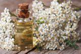 Tinctura de coada soricelului – SAPTE beneficii uimitoare si contraindicatii