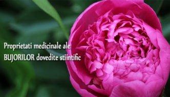 Ceaiul din petale de Bujori – 7 proprietati medicinale dovedite stiintific
