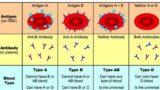 Dieta grupelor sanguine – Ce avantaje ai daca o urmezi