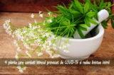 PATRU plante care combat stresul provocat de carantina COVID-19 si redau linistea inimii