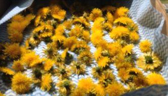 Tratamente naturiste cu flori de păpădie. Sfatul Dr. Ruxandra Constantina, medic specialist naturopatie