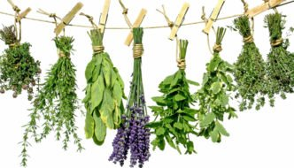 Plante medicinale si ierburi care fac minuni in cura de detoxifiere si de slabire