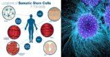 Ce boli pot fi tratate cu ajutorul celulelor STEM
