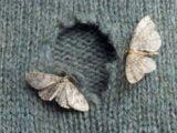 Solutii naturiste pentru a scapa de molii